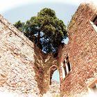 Burgruine mit Baum