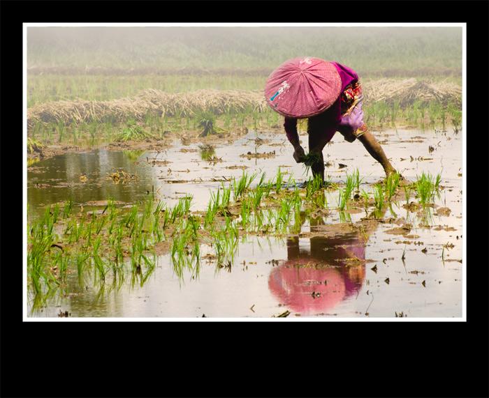 Buried Rice