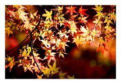 Burning autumnal tints