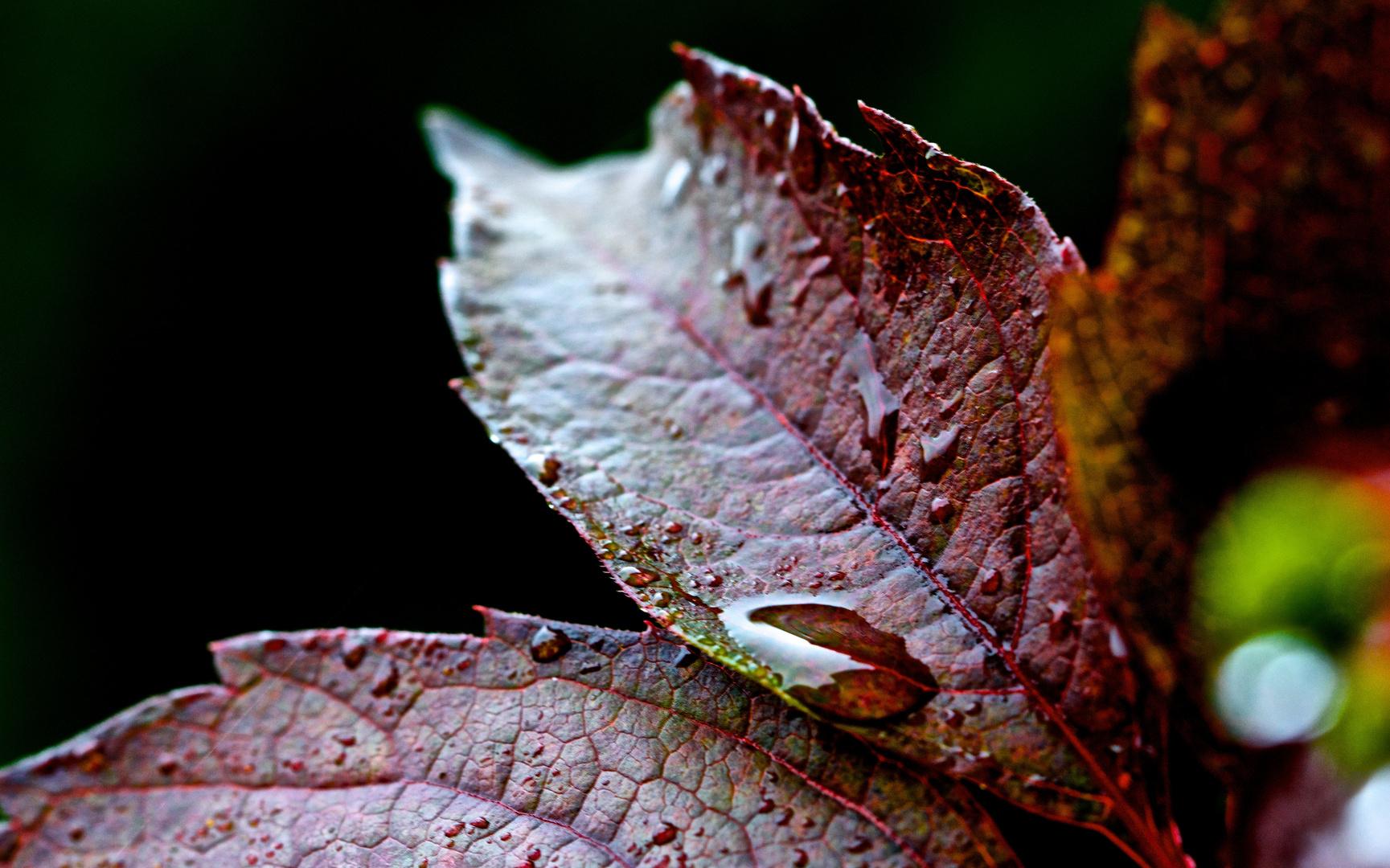 burning leaves in autumn