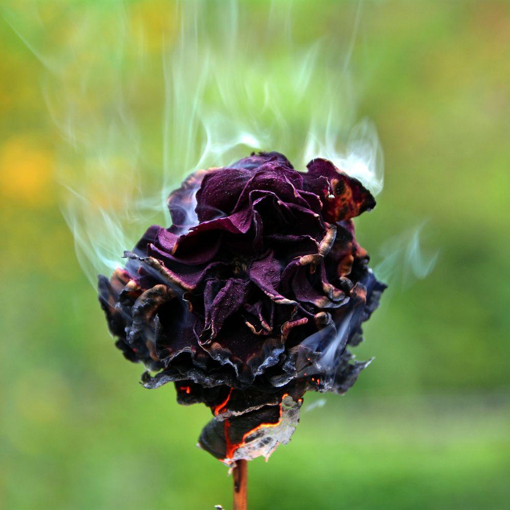 burning old rose