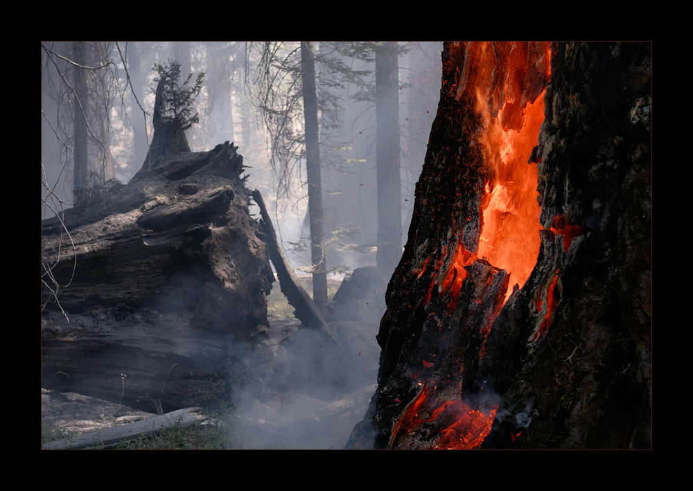 [ Burning Sequoia ]