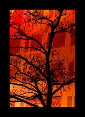 [ Burning Tree ]