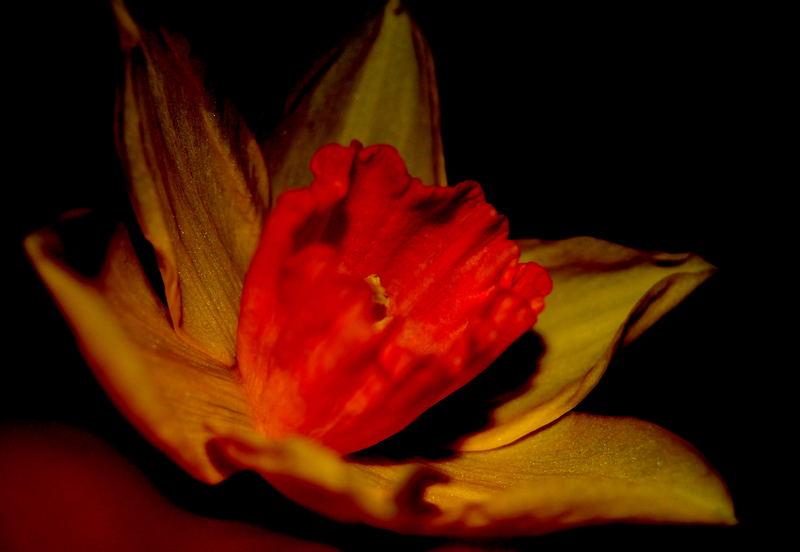 Burnt Flower?