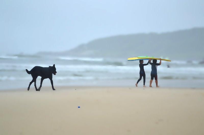 buscando olas