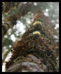 bush-detail >