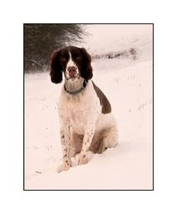 Buster in the snow