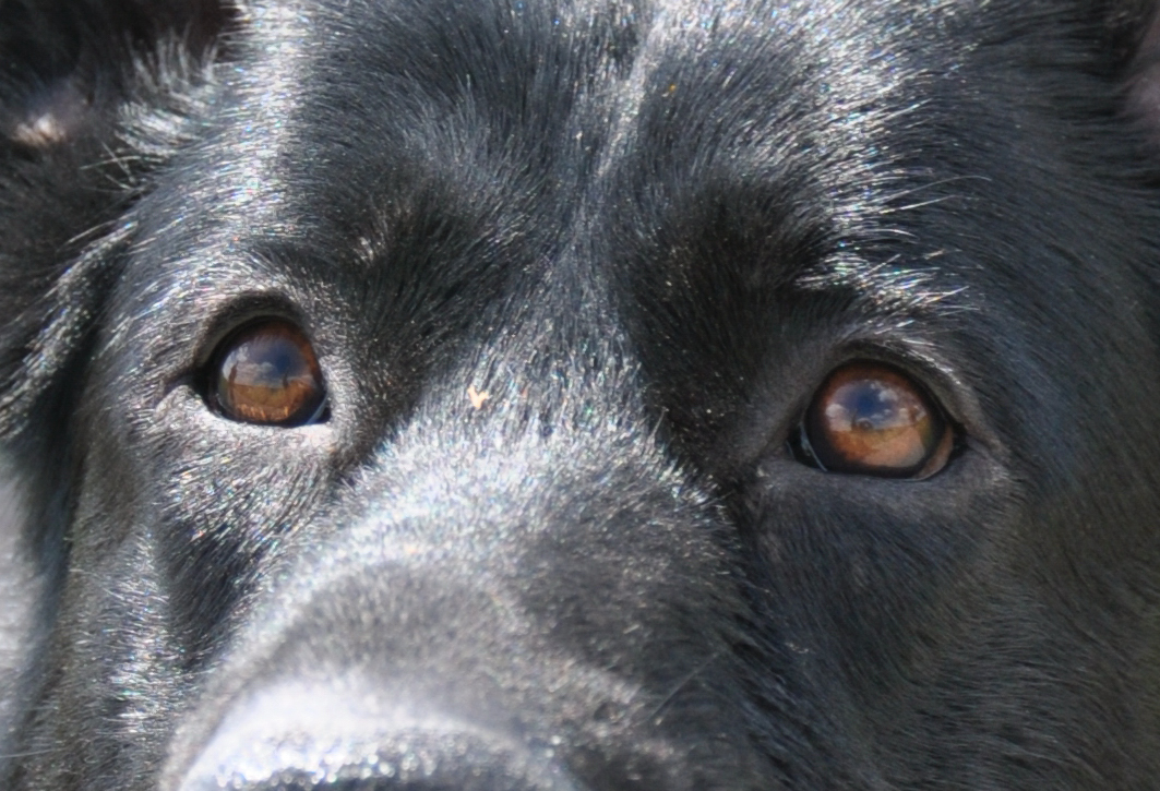 Buster´s eyes!