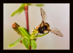 busy bee....#2