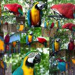 Busy Birds