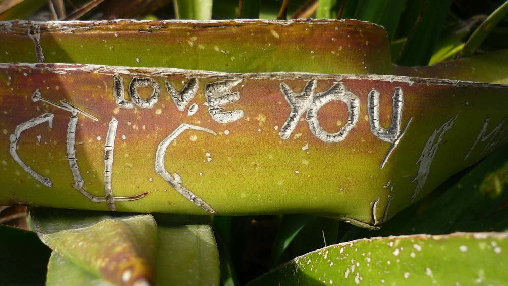 but Cactus can loves you too