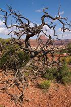 Butte in Tree