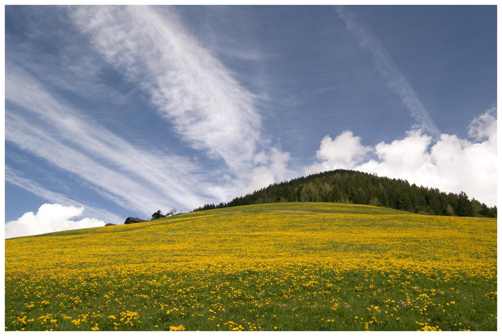 Butterblumige Bergwiese