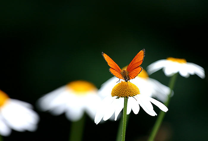 ..butterflay..