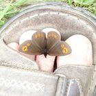 Butterflie Affection