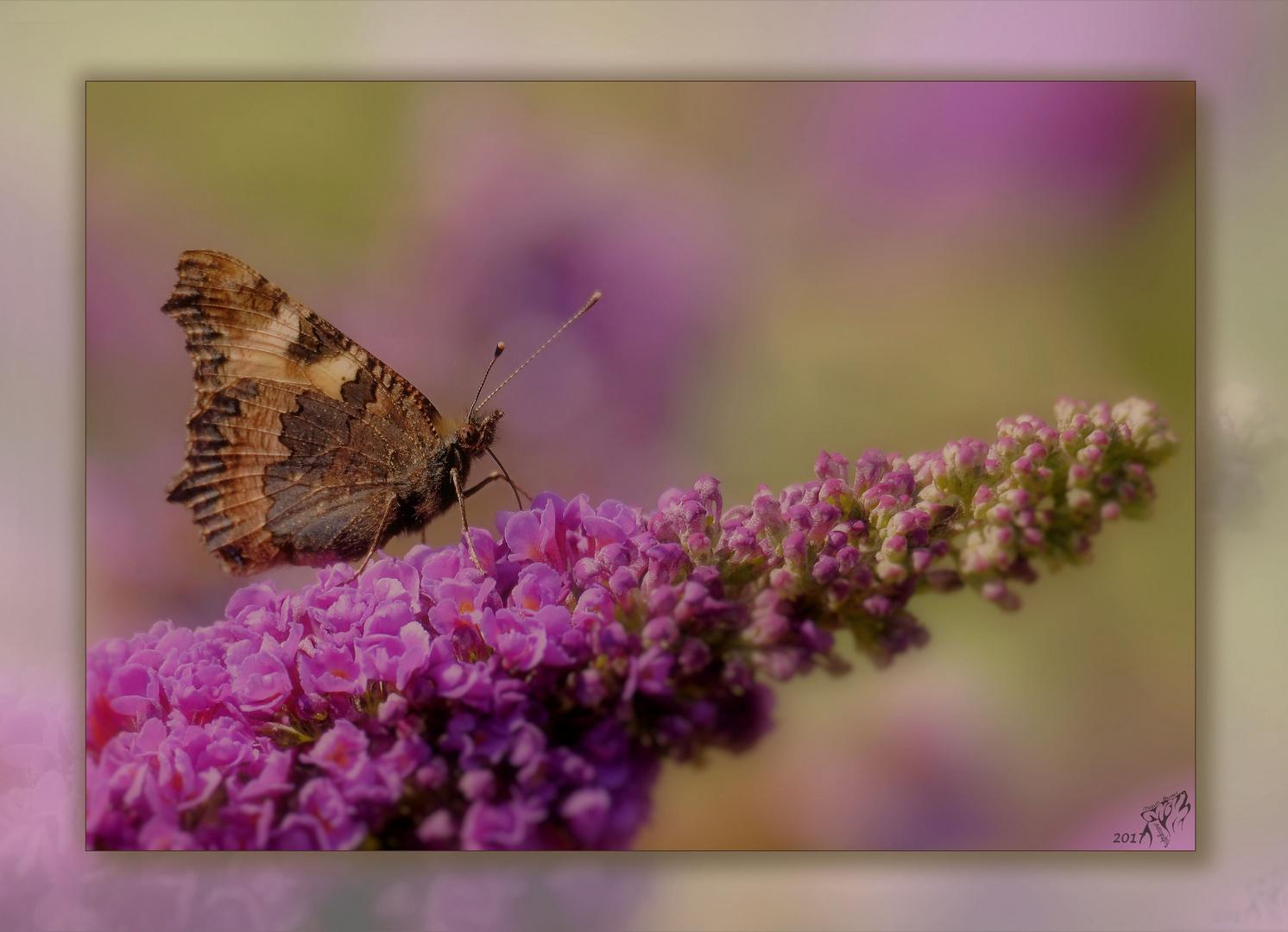 Butterflies and romance ..