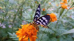 """"""" Butterfly 1 """", Ibajay - Aklan"""