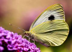 ....butterfly....