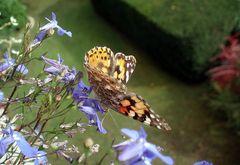 Butterfly | 2