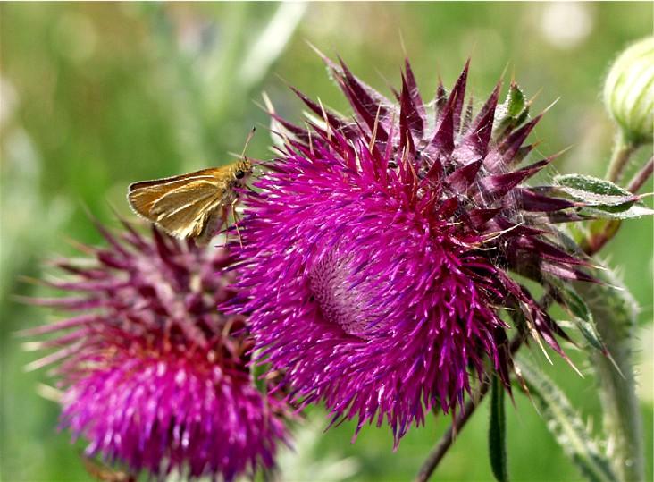 Butterfly - 2 -