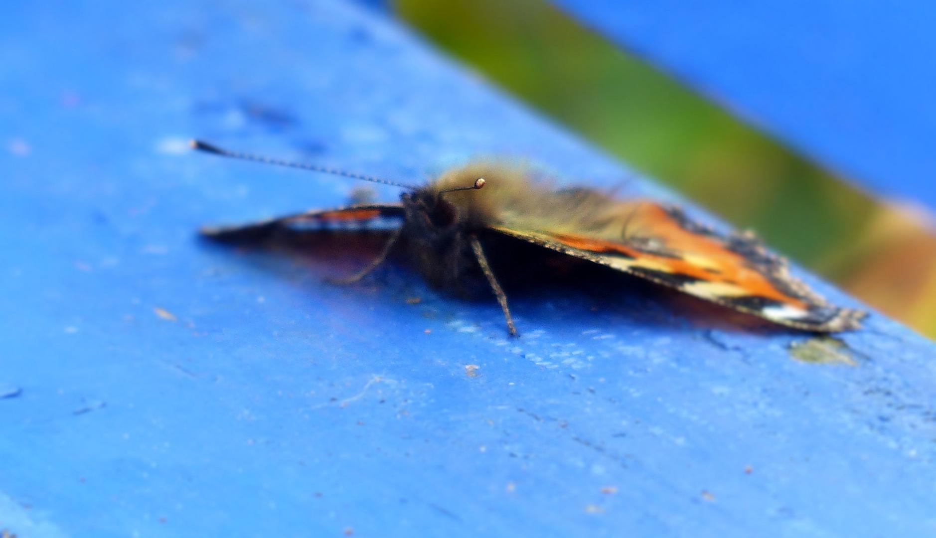 ... butterfly