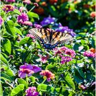 Butterfly and Blossoms No. 6