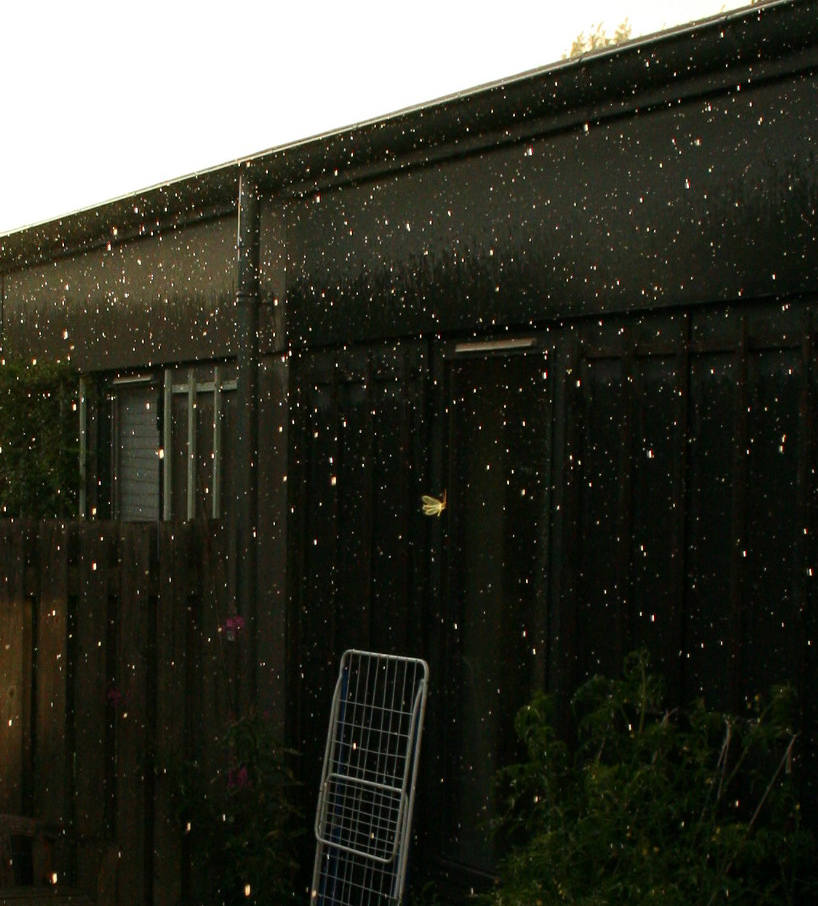 Butterfly dogding rain