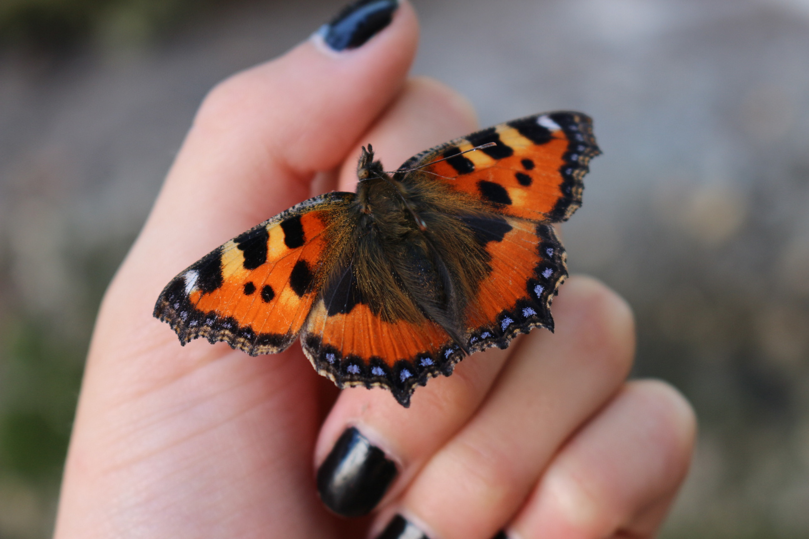 butterfly don't fly away 2