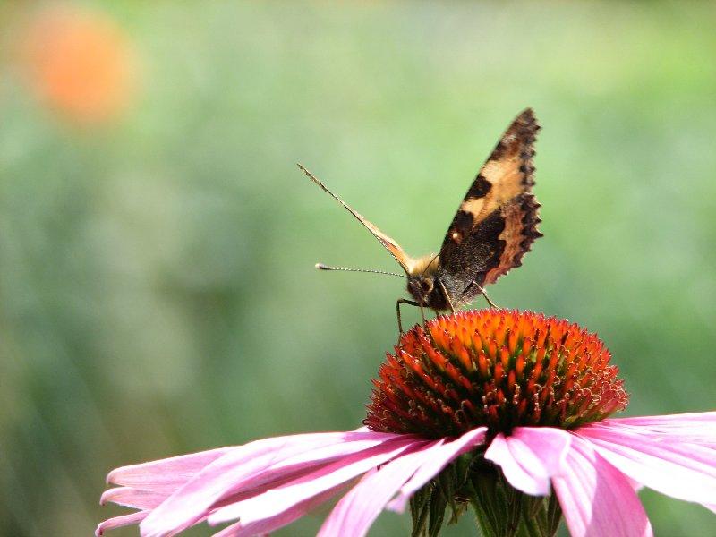 """Butterfly-""""Effect"""""""