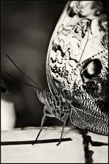 ~ Butterfly III ~