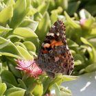 Butterfly in Ibiza