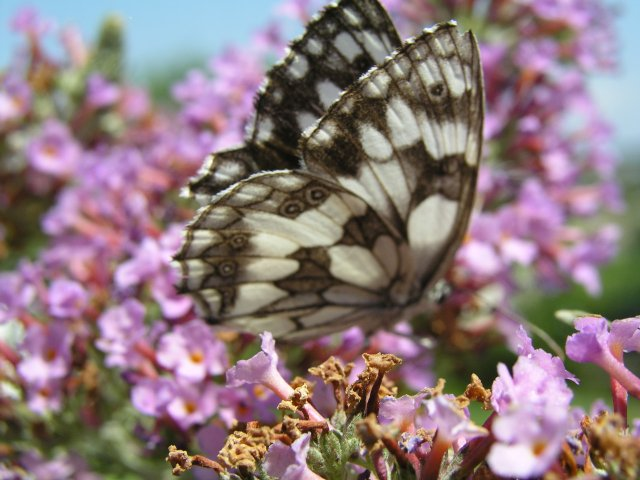 Butterfly in pink...