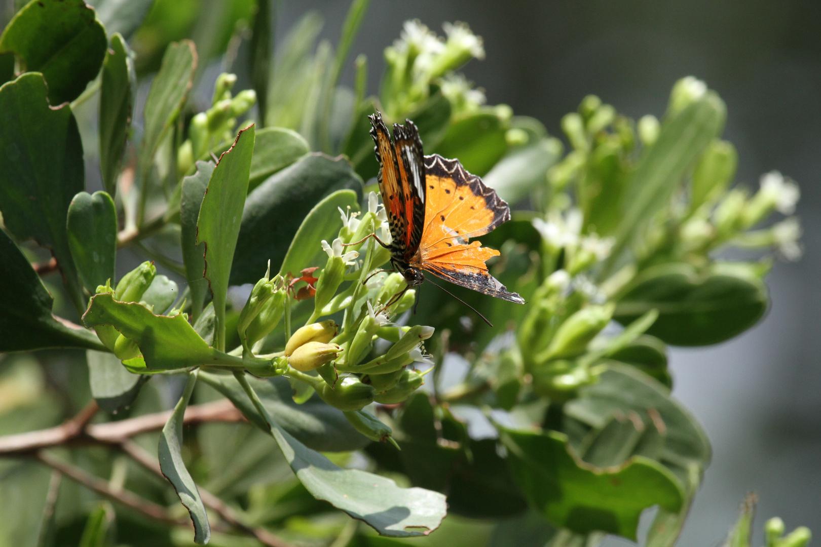 Butterfly in senior days