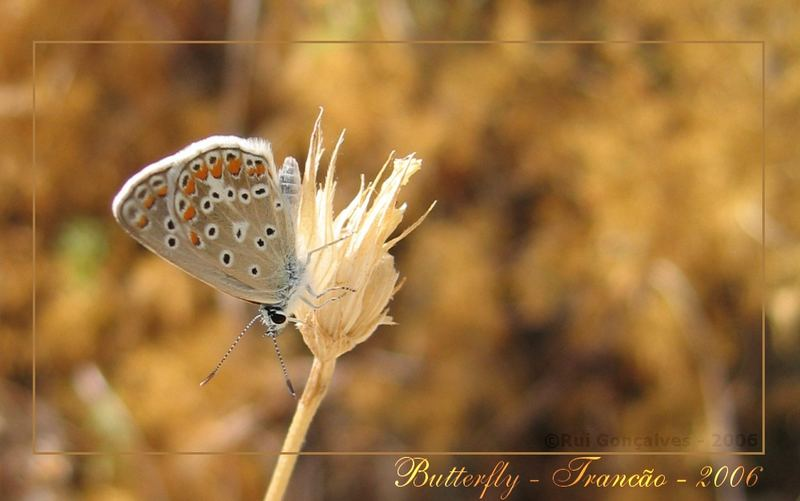 Butterfly in Sight