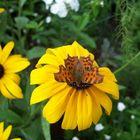 butterfly on flower - motyl na kwiatku
