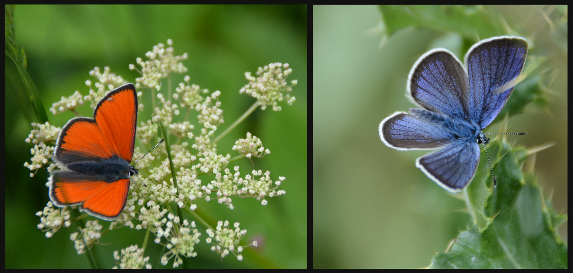 Butterfly Paradise