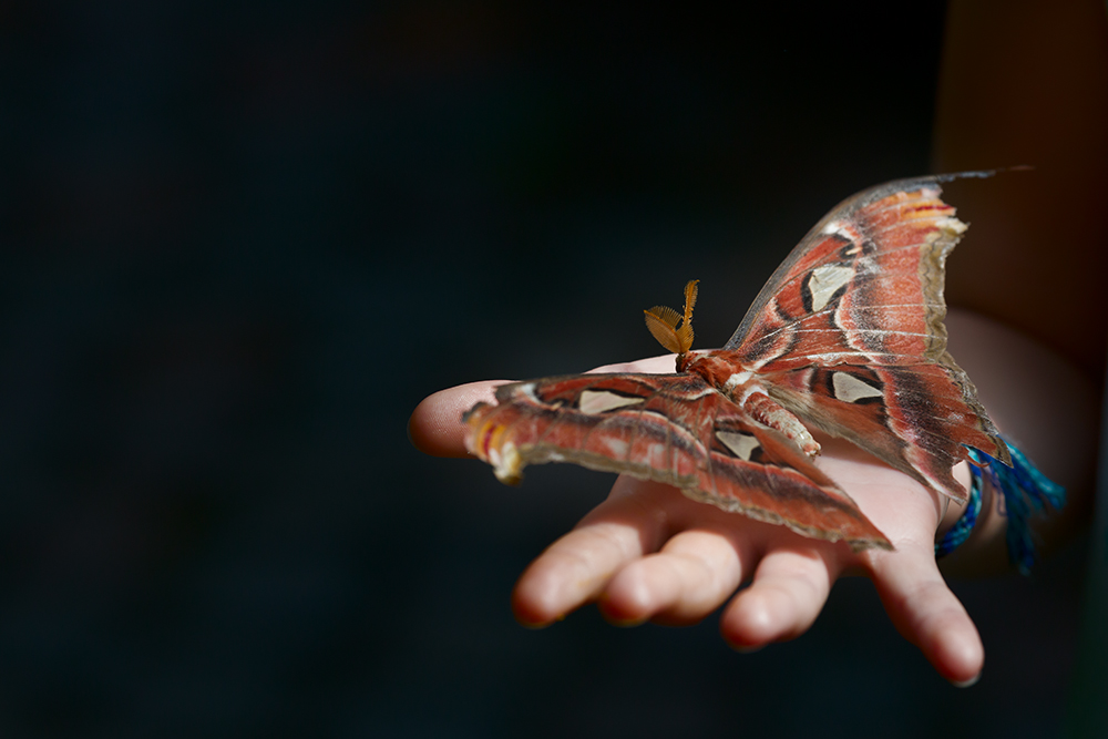 Butterfly ... Part3