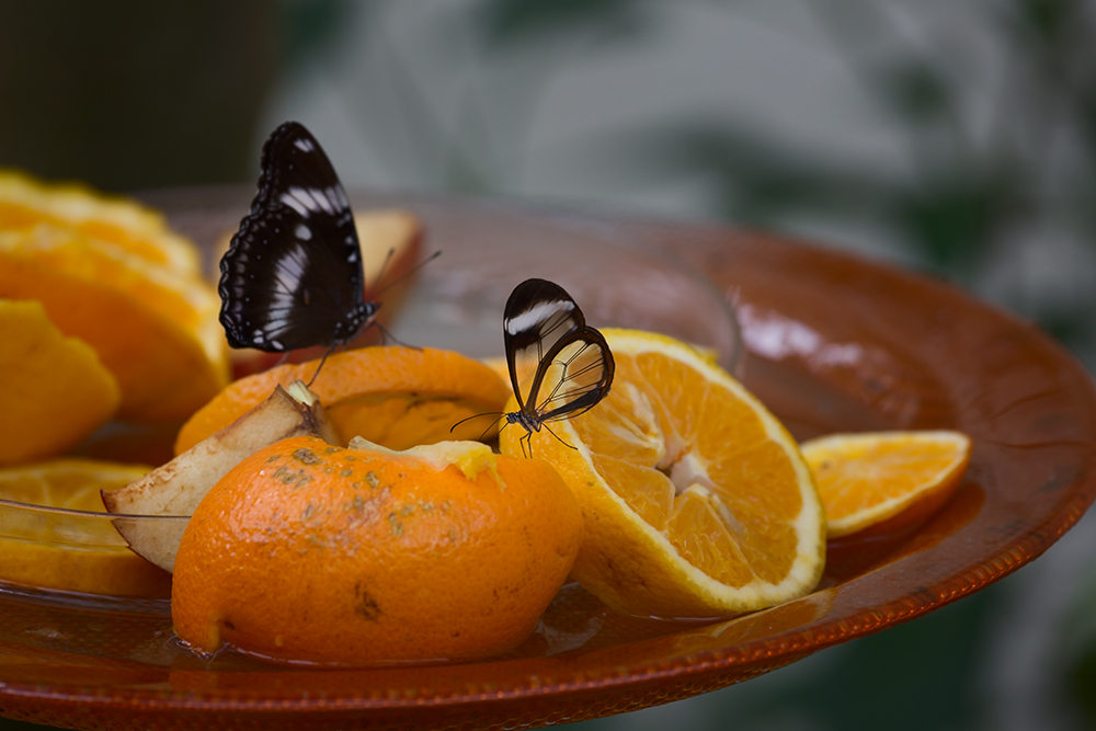 Butterfly ... Part4