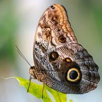 Butterfly Profile 2