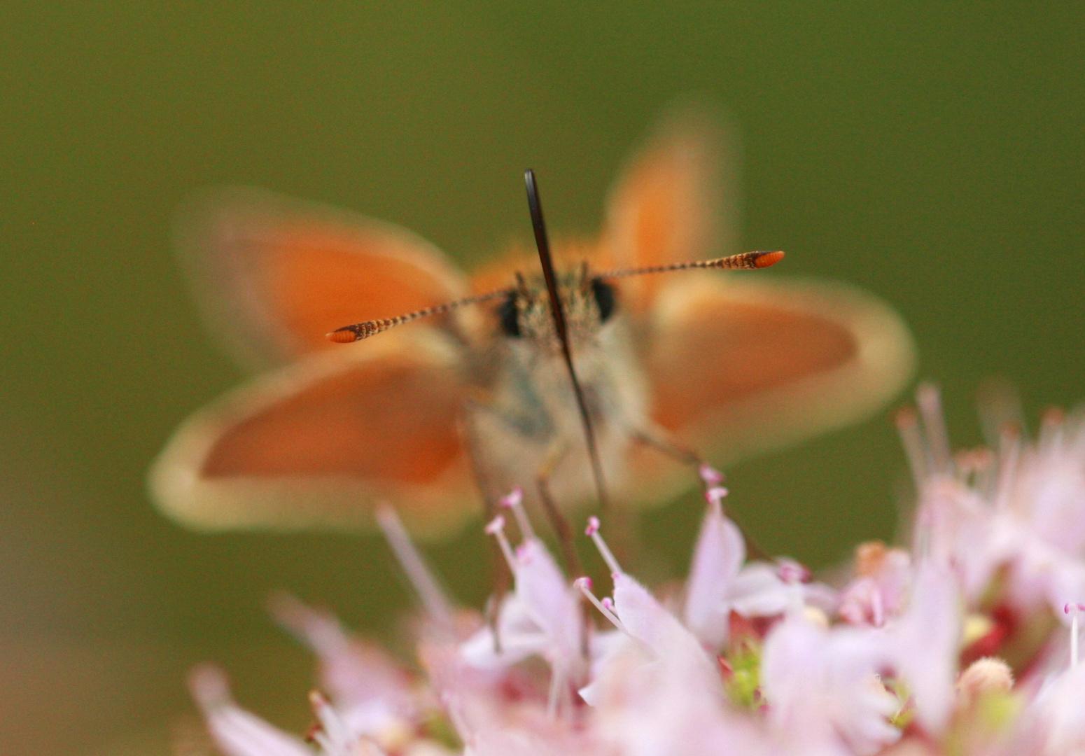 Butterfly-Summer 12
