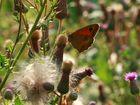 Butterfly-Summer 5