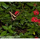Butterfly - Winter time in Miami 3