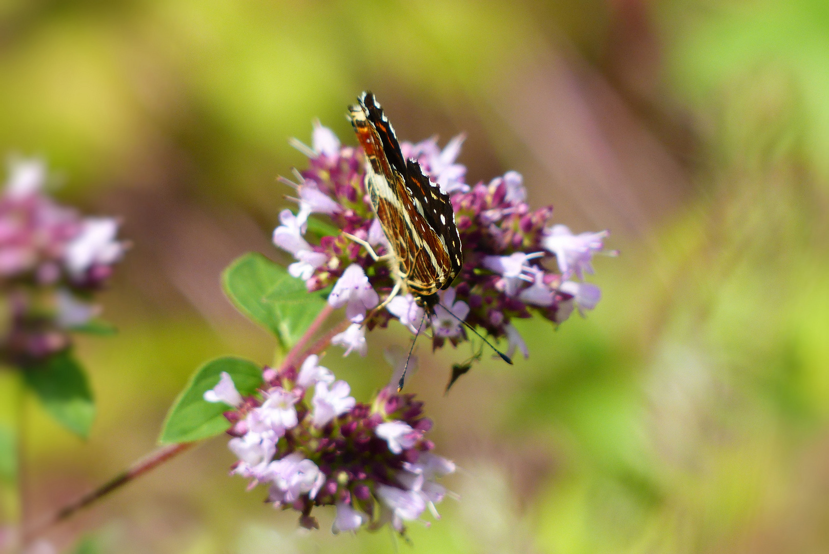 Butterfly with folded wings