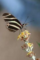 Butterfly_09