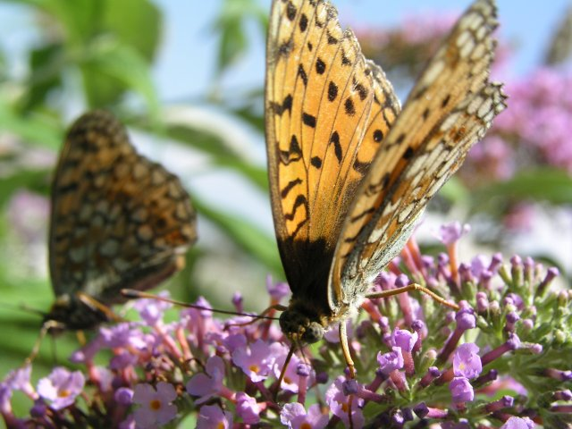 Butterflys at work