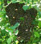 buzz, buzz, busy bee