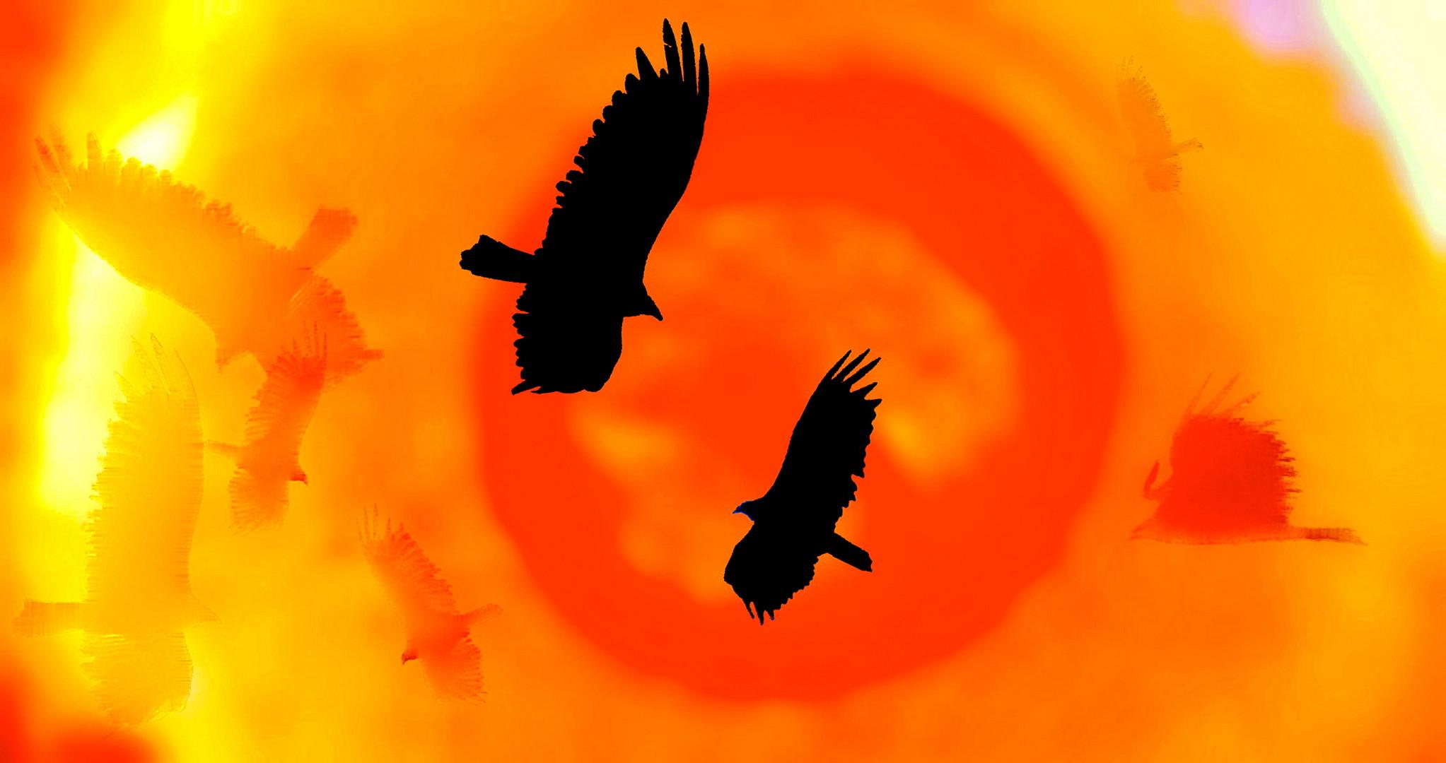 buzzard roundup