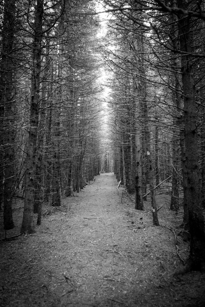 B&W forest