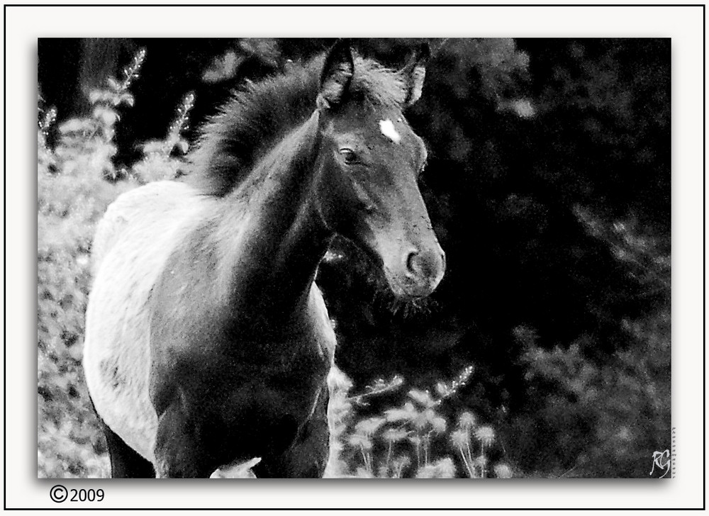 BW Horse