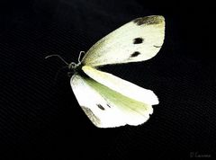 ~~ bye bye butterfly ~~